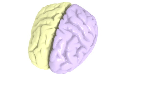 Animation depicting a color-coded brain splitting up into its component parts.