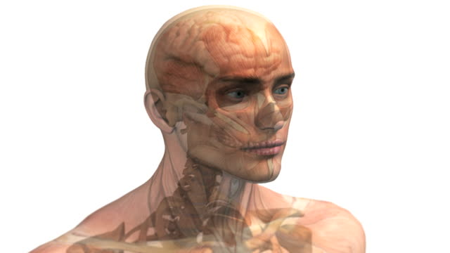Animation depicting a view of the brain within the skull and head.  As the camera zooms into the brain the head, skull and half the brain fade down to leave a sagittal section of the brain.