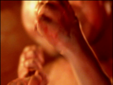 Animation of foetus sucking thumb in womb