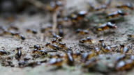 Ant crawling to colony