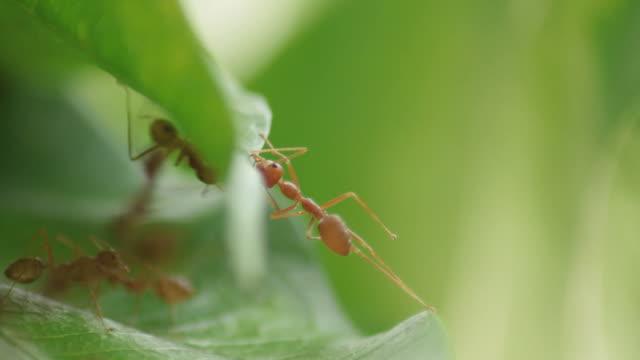 ant help their friend