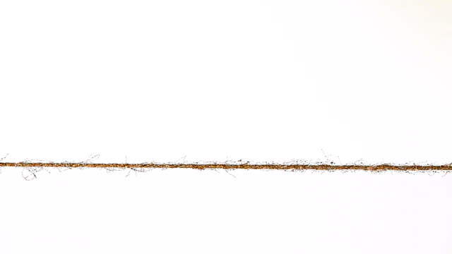 Ant moving on a thin rope