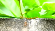 ant walking on the wall