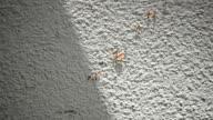 Ant walking