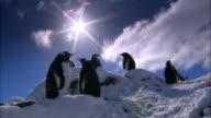 MS, LA, Antarctica, Port Lockroy, Gentoo Penguins standing on snow, sun shining on blue sky