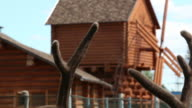 Antler in front of the mill