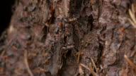 Ants at Anthill