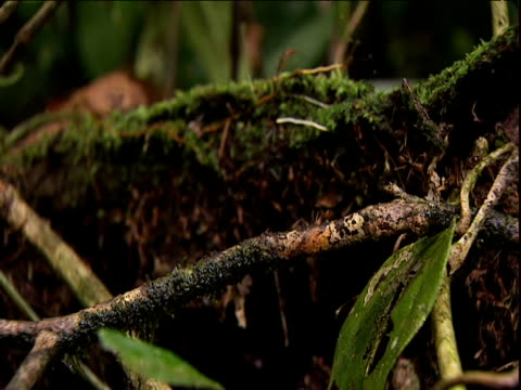 Ants crawl over rotting wood Venezuela