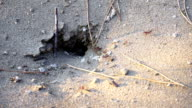 Ants in the hole