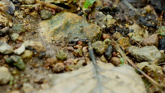Ameisen bewegen Nest auf dem Boden.
