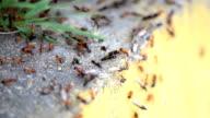 Ants on work