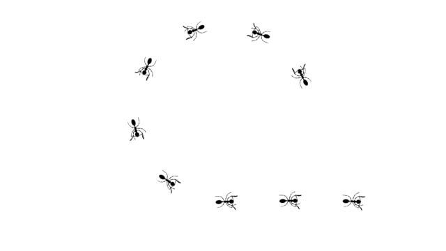 Ants path: Circle, Heart.
