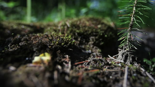 Ants scrambling on forest soil close-up