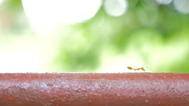 Ants walking
