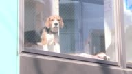 Apartment not big enough for a dog Too busy for walkies In crowded Tokyo you can rent a mutt for a few hours of wet noses and unconditional loving...