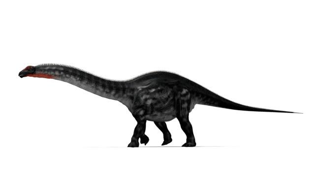 Apatosaurus dinosaur walking