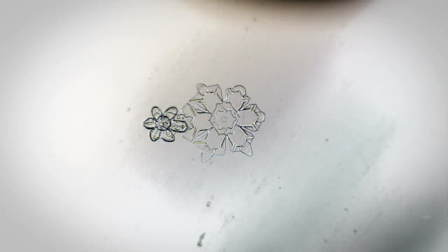 Appearance of two snowflakes under a microscope appearance of two snowflakes under a microscope