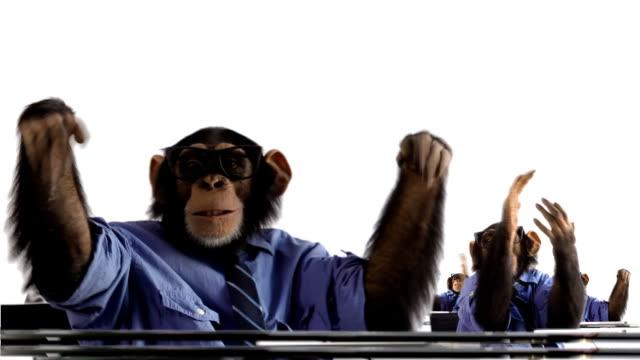 Applauding Monkey Crowd