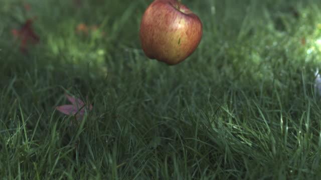SLO MO apple falling, hits ground, medium close up, stalk upper right