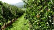 LD Apple orchard
