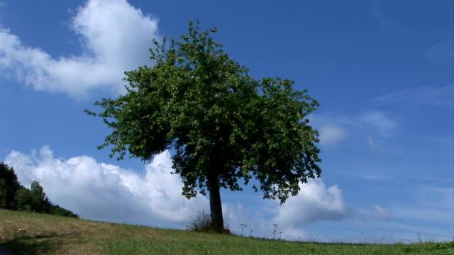 Apfelbaum auf einem Hügel