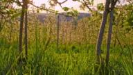 SLO MO Apple tree orchard