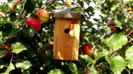 apple tree with bird house