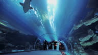 WS LA Aquarium tunnel at Dubai Mall with sharks / Dubai, United Arab Emirates