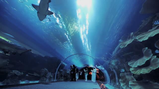WS LA Aquarium tunnel at Dubai Mall with sharks / Dubai, United Arab Emirates