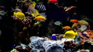 Aquarium with saltwater fish