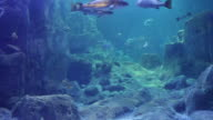 Aquarium with saltwater fish