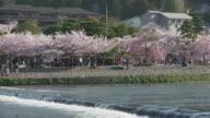 Arashiyama Park With Cherry Blossoms In Kyoto