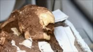 Archaeologist Michelle Toledo announced on Tuesday the discovery of remains from a burial carried out 2500 years ago a find she made whilst...