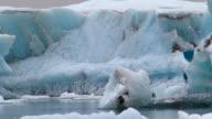 Arctic Tern Fly Around The Ice Mountain