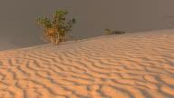 MS Arid landscape at Mungo national park / Mungo Nationalional Park, New South Wales, Australia