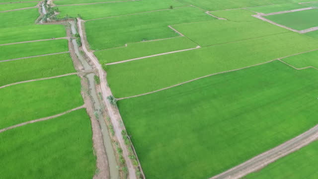 Ariel view of rice field and mountain in Thailand