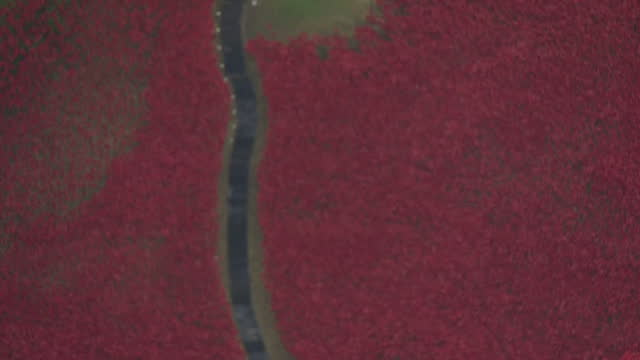Armistice Day 2014 Showing Aerial shots of Tower of London sea of red ceramic poppies 'Blood Swept Lands and Seas of Red' installation on November 11...