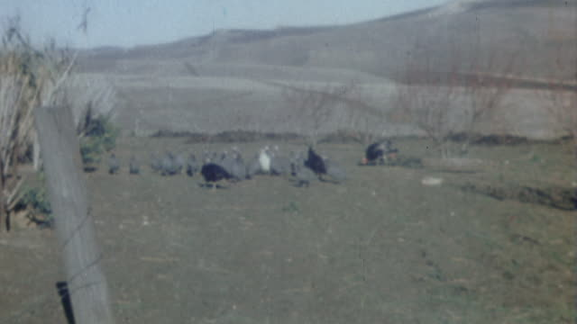 S Army soldiers preparing to celebrate Thanksgiving by raiding local poultry farms and buying fowl from the locals / Tunisia
