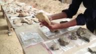 Arqueologos hallaron en una obra de Tel Aviv fragmentos de vasijas de 5000 anos de antiguedad que los egipcios utilizaban para hacer cerveza