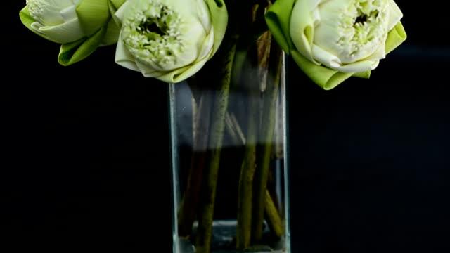 arranged lotuses  in a glass vase