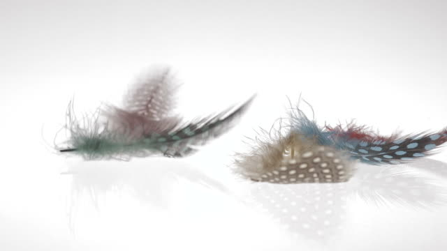 Art Abstract Background Beautiful colorful feathers in reverse slow motion