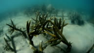 Artificial coral reef transplant in sea
