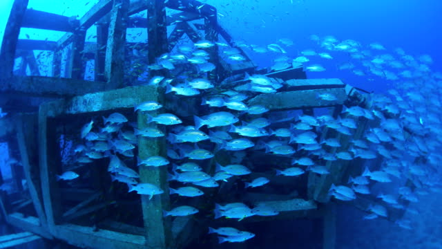 artificial reef, Thailand