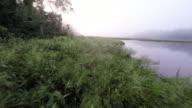 Ascending Aerial over Amazon River Marsh & Shore