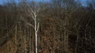 Ascending Shot of Dry Leafless Treetops