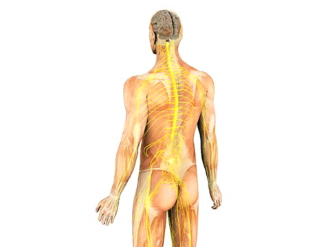Ascending spinal pathways