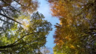 Ashridge Autumn Driving POV