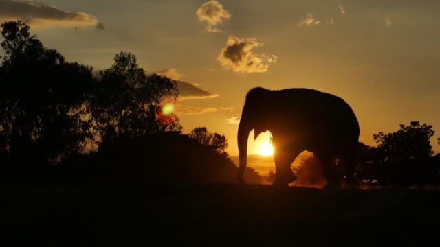asia elefante nella foresta al tramonto