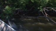 Asian carp fishing in the Illinois River on July 21 2014 near Morris Illinois