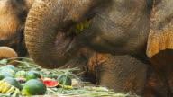 Asian Elephants in Thailand